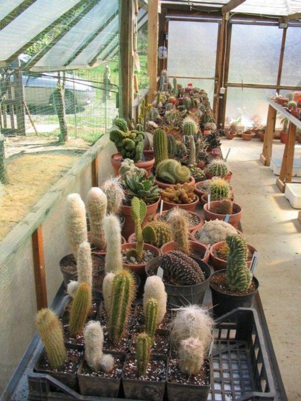 Piante grasse e succulente per passione for Serra piante grasse
