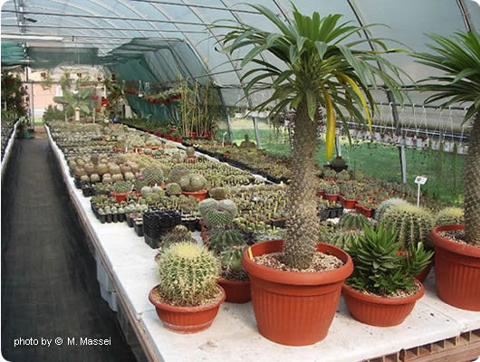 Piante grasse e succulente per passione for Piante di lamponi acquisto