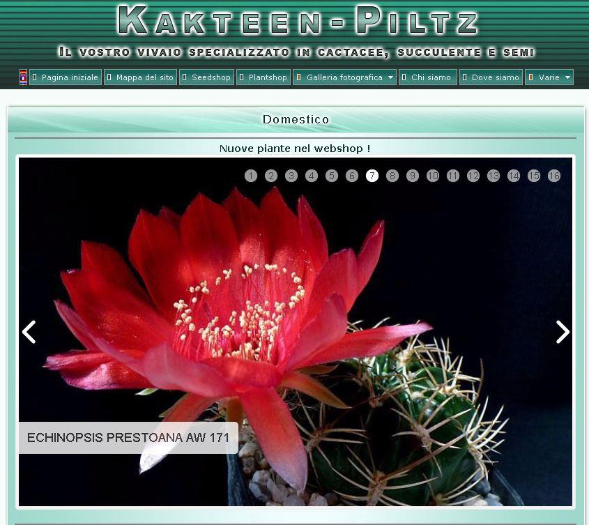Piltz Kakteen unsitodelcactus it piante grasse e succulente per passione