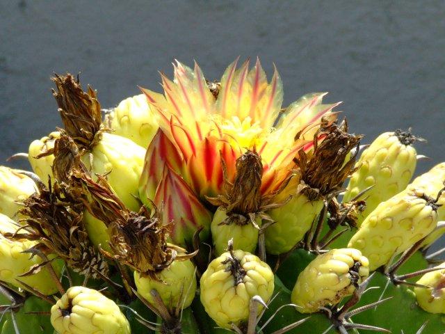 UnSitoDelCactus.it - Piante Grasse e Succulente per Passione!